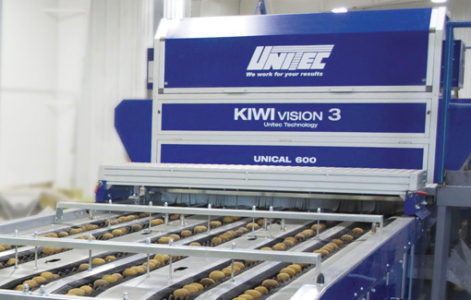 Kiwi Fruit Sorting, Grading and Packing machines, Processing Plant